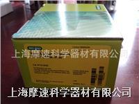 Bio-Rad Micro Bio-Spin 30 小柱 RNAse free  732-6250 732-6250