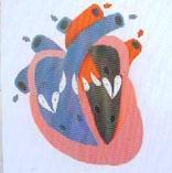 心髒收縮、舒張與瓣膜開閉演示模型|上海红杏视频永久科教設備有限公司 SMD090