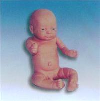 KAH-8高級足月嬰兒模型 KAH-8