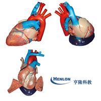 心髒解剖模型 GD-0321B