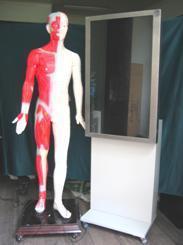 多媒體人體針灸穴位 交互數字平臺 -MAW-170EX