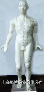 中医针灸穴位模型 人体针灸模型 GD-100A
