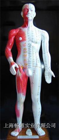 针灸模型 半皮肤人体针灸模型(十四经穴模型84CM) CB203