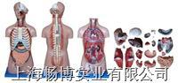 躯干模型|无性躯干模型20件  CBB-XC-206