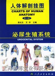 医学挂图|《人体解剖挂图》-泌尿生殖系统挂图 CBB-GT-4(18张)