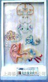 电动医学教学模型|听觉传导电动模型 SME14