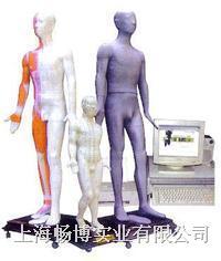 中医针灸 针灸模型 多媒体按摩点穴电子人体模型 CBB-170A
