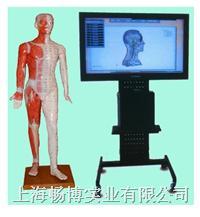 针灸教学用具|多媒体人体针灸模型数字互交平台系统 WST/42M
