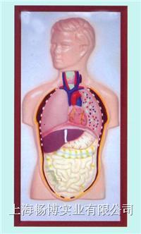 医用浮雕教学模型|人体头颈躯干浮雕模型 CLM2079-10