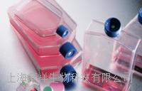 人臍靜脈血管內皮細胞 HUVEC[HUV-EC-C]