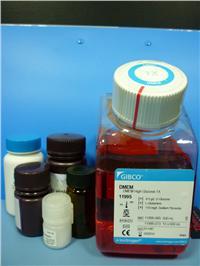 Collagenase膠原酶II(分裝) orj-1238