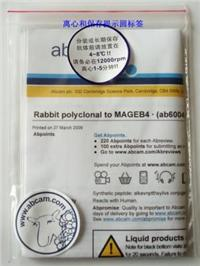 Rabbit polyclonal to Cdk7
