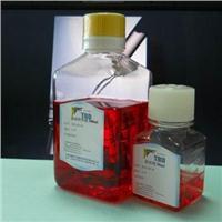 TBD兔DC樹突狀細胞完全培養液  WRAB2012HDCM