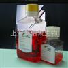 羊間充質干細胞無血清培養液500ml/Kit  G2012MSCM
