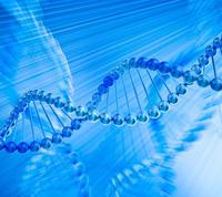 microRNA靶基因驗證