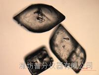 顆粒錄影顯微鏡技術PVM