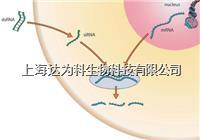 siRNA合成